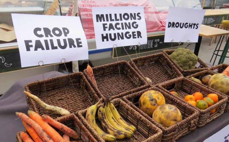 Ötödével kevesebb élelmiszert termel a világ, mint 1960-ban, de nem szándékosan...