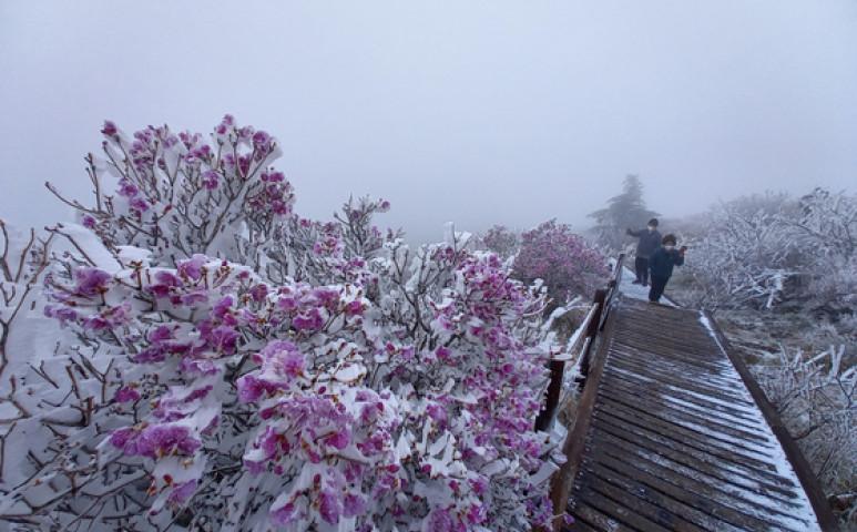 Dél-Koreát belepte a hó