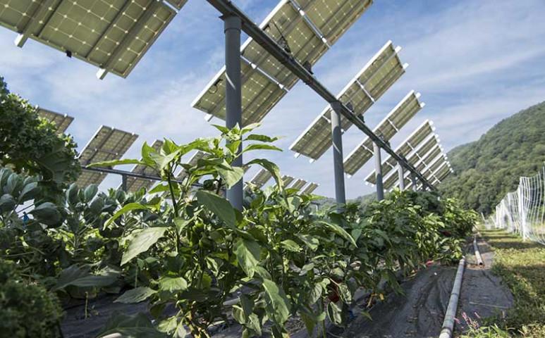 Védjük a klímaváltozás miatt veszélybe került mezőgazdasági termelést napelemekkel