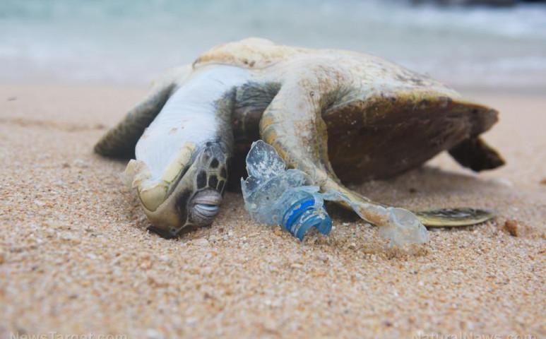 Ázsia állatvilága belefullad a műanyagokba - szó szerint