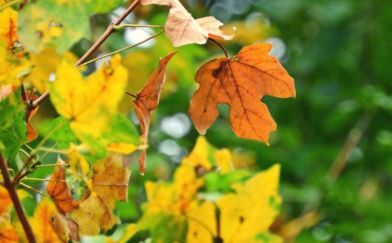 Közeleg az igazi ősz