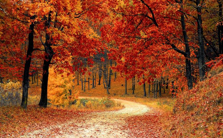 Hűvös őszi idő