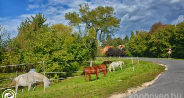 Legelésző lovak augusztusban