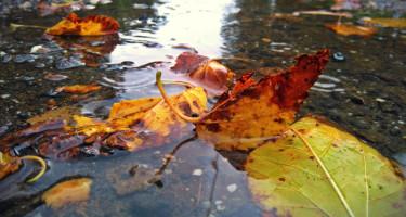 Hamisítatlan ősz
