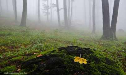A párás erdő ősszel