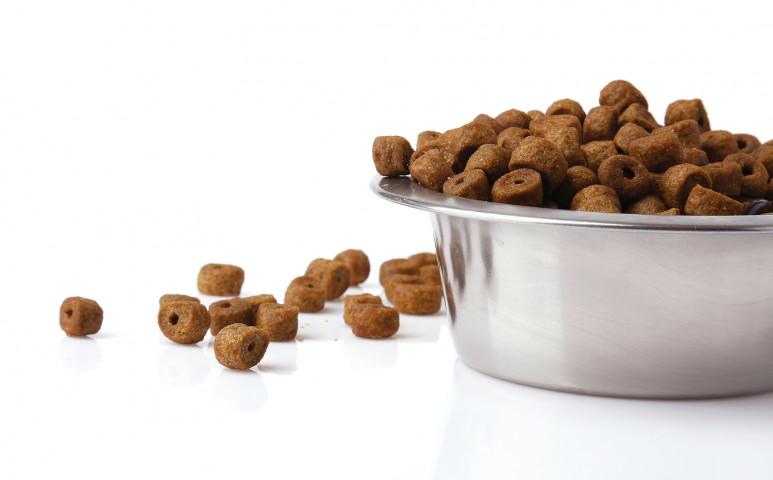 Rovarokkal etetett kutyák?