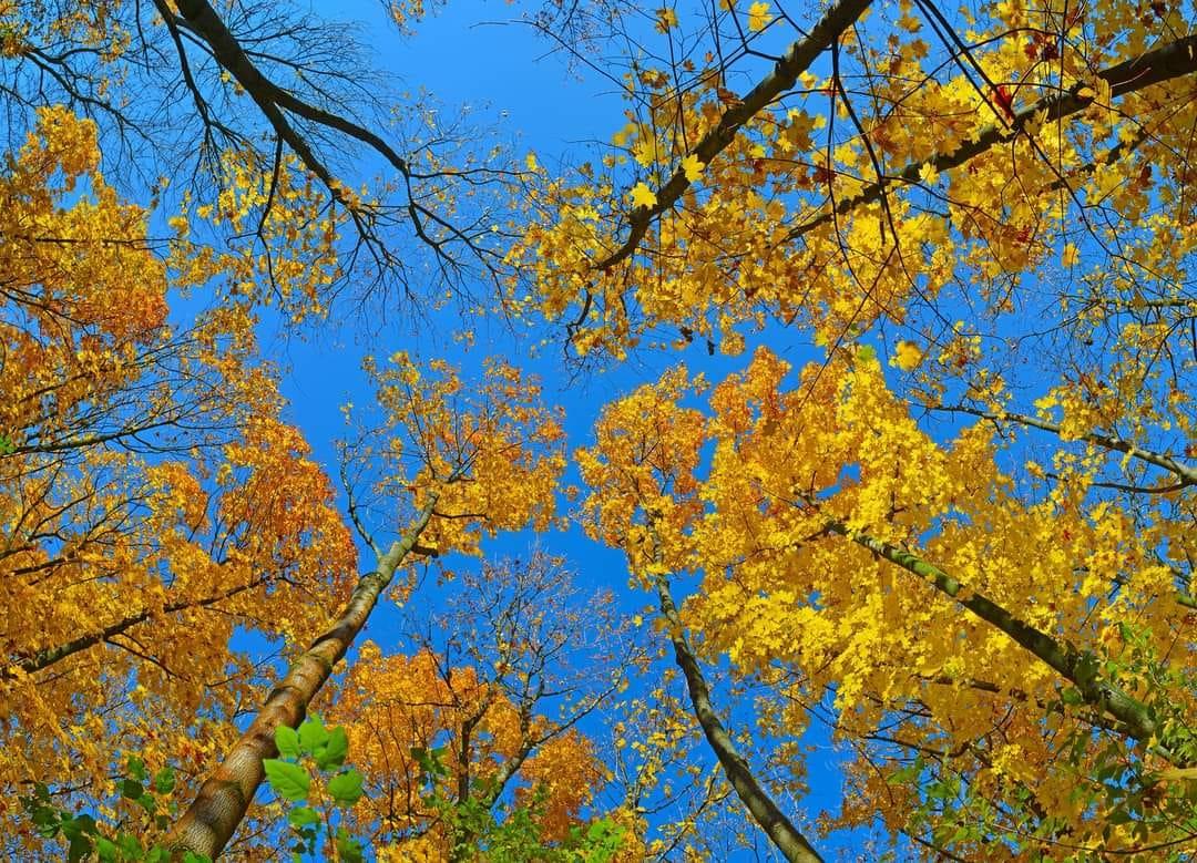 Kellemes októberi napsütés