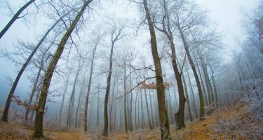 A fagyos erdő mélyén